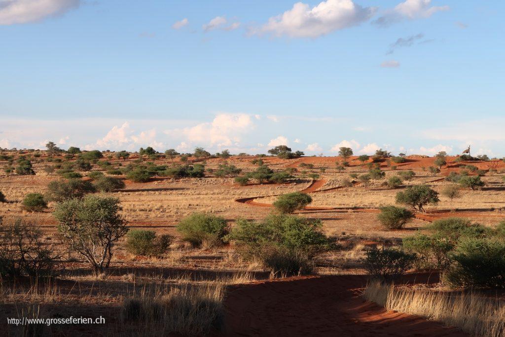 namibia_2018_005