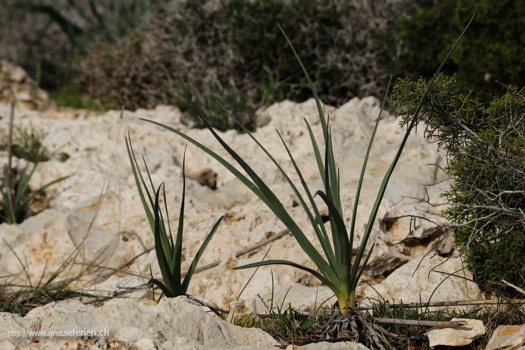 cyprus_059